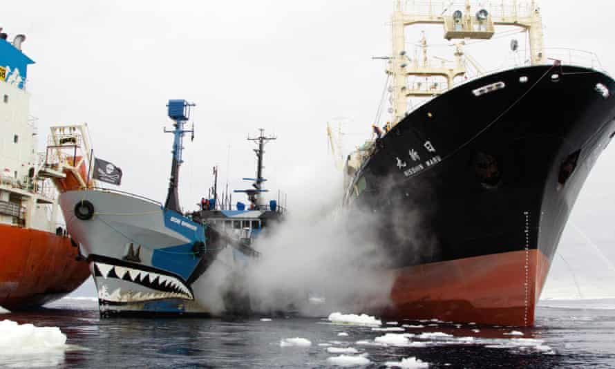 Nisshin rams Bob, steam from water cannon. A still from the Sea Shepherd film Defend, Conserve, Protect.