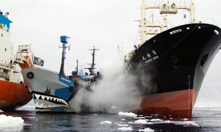 'We're in the midst of this almost naval-like battle.' A Sea Shepherd boat is rammed by a Japanese whaling ship in the documentary Defend, Conserve, Protect.