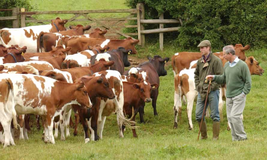 Prince Charles spoke about using homeopathy on his own dairy herd during a speech on antimicrobial resistance at the Royal Society in London.