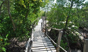 Mikoko Pamoja has its own ecotourism unit, featuring 450 metres of boardwalk among the mangrove trees and a cafe that sells food to tourists.