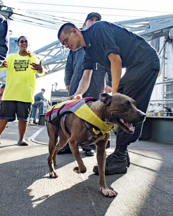 A sailor greets Zeus the dog with his owner Tasha Fuiaba, left, on the boat deck of the USS Ashland.