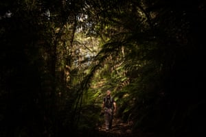 Wildlife and Conservation photojournalist Doug Gimesy wanders through the wet forest near the headwaters of Skenes Creek. This trip was the first time Doug has managed to get into the field for four months