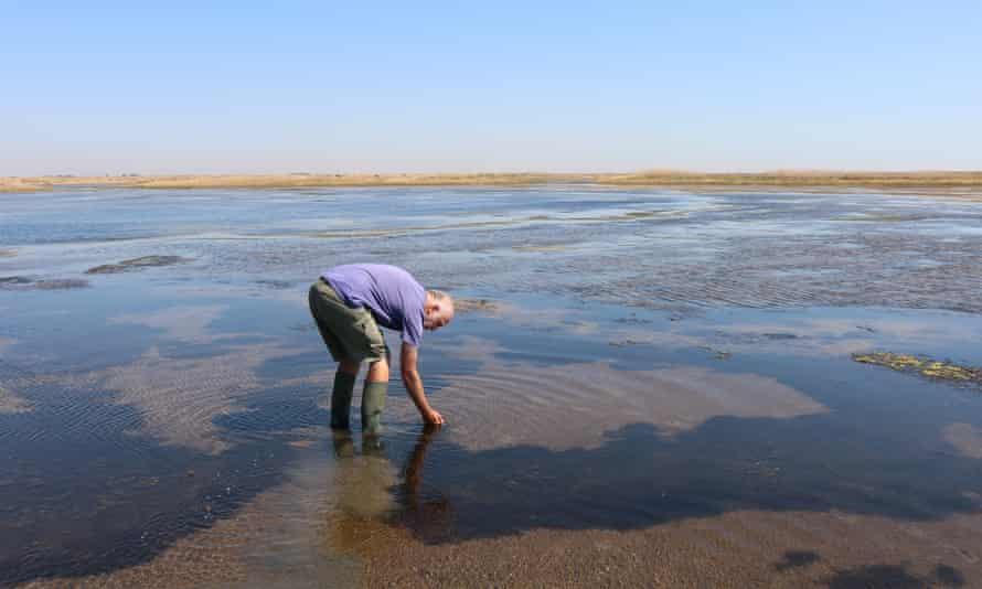 tidally flooded salt marshes on Wallasea island, Essex.
