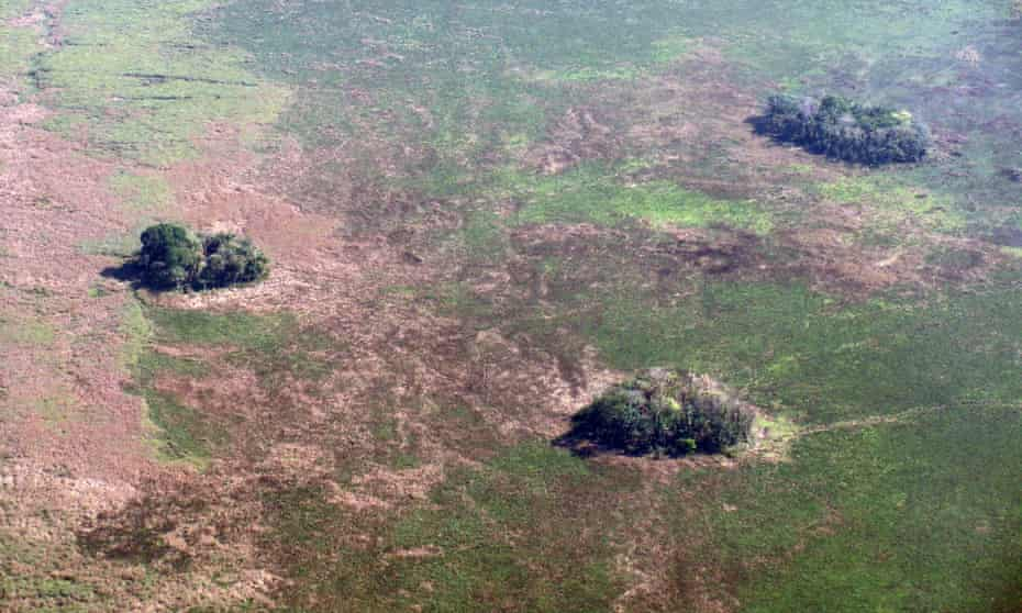 Forest islands seen from above in Bolivia's Llanos de Moxos.