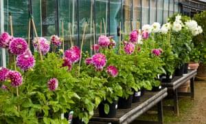 Plants for sale at Petersham Nurseries, Richmond