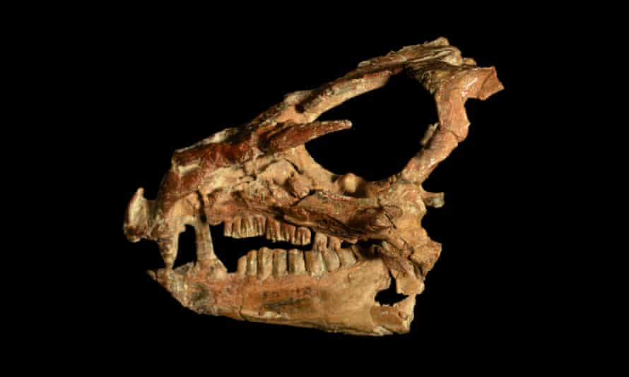 Early dinosaurs looked very simialr to each other so their relationships are hard to fathom leading to disagreements