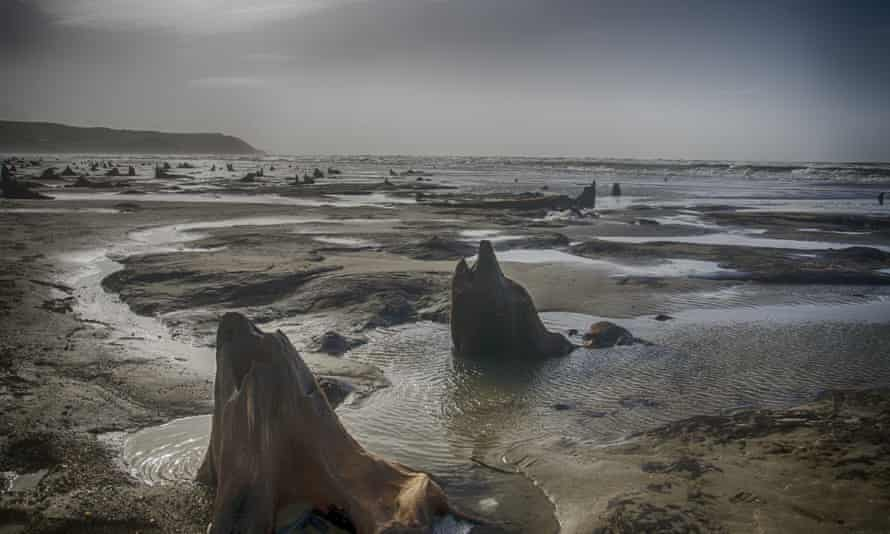 Borth where hundreds of oaks that died more than 4,500 years ago rose from the sea, just like in the myth.
