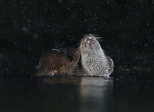 Otter scratching by Mary Wilde