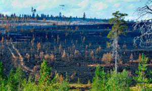 Burnt forest: two hot, dry months in Sweden have turned the region into a tinderbox.