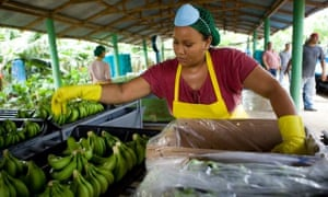 A worker in a banana plantation