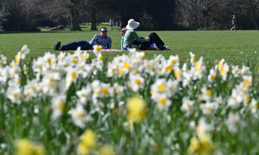 daffodils and people in park