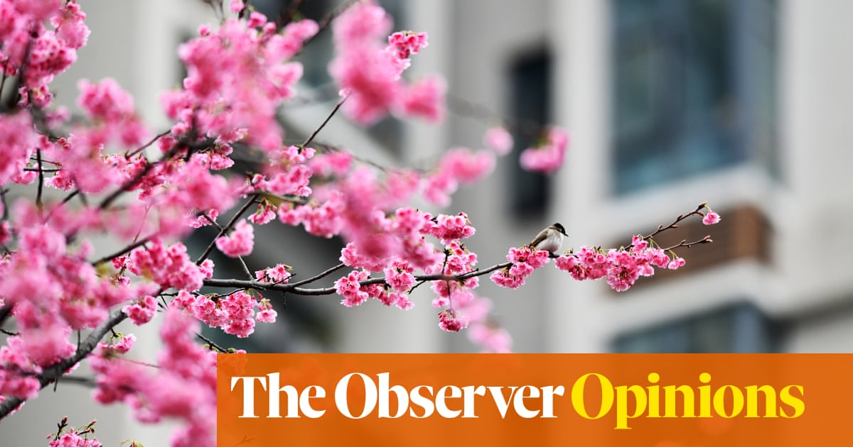 Cherry blossom brings a welcome sign of spring to Hackney