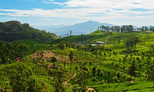 c0b21505f A backpacker s guide to Sri Lanka  a one-month itinerary