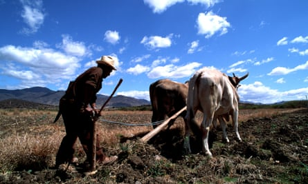A campesino ploughs a field in the state of Oaxaca, Mexico. Integration is particularly hard for children in communities rife with poverty and illiteracy.