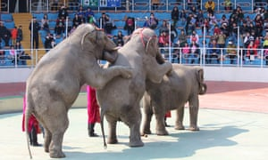 Elephants performing at the Shanghai Wild Animal Park in March 2017.