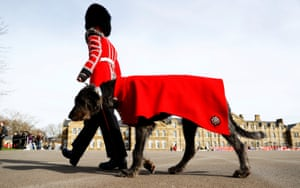 Irish wolfhound Domhnall and a member of the Irish Guards prepare for a St Patrick's Day parade in London, England