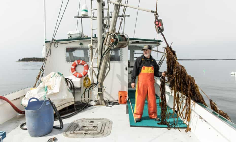 Fisherman Bob Baines with kelp on his boat, the FV Thrasher.