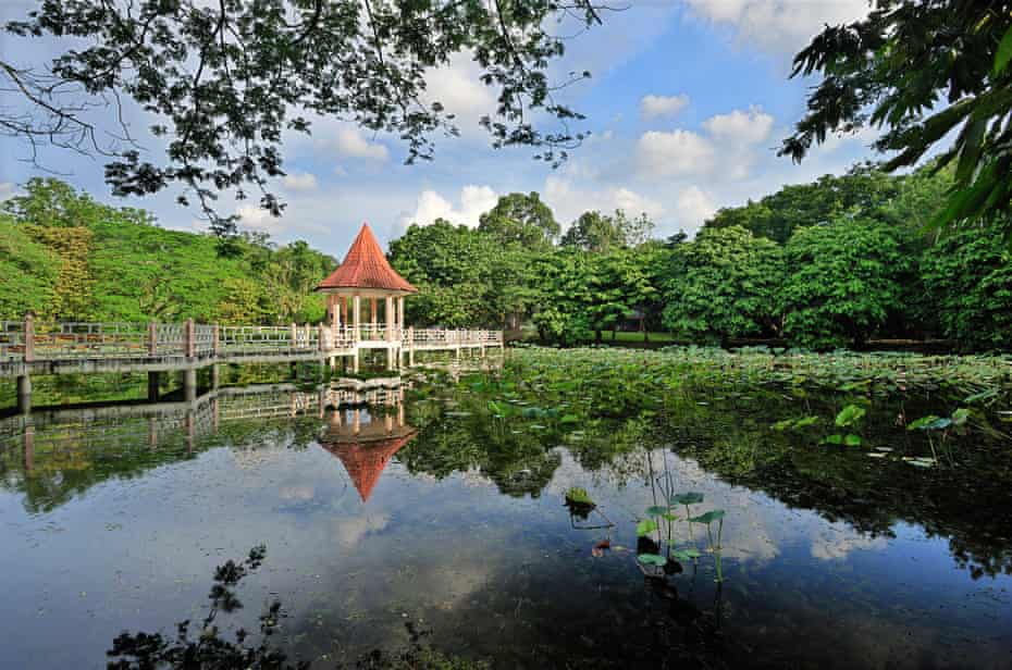 Reflection of the gazebo on the pond filled with lotus at Taiping Lake Garden, Taiping, Malaysia.