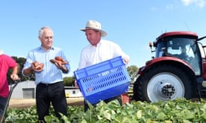 Malcolm Turnbull digs up potatoes with Barnaby Joyce