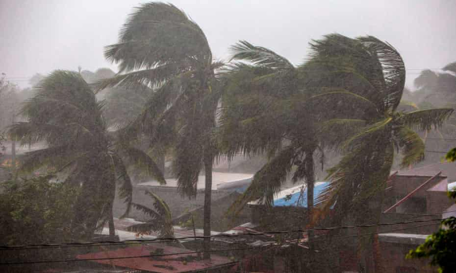 Palm trees blow in the wind in Bilwi, Nicaragua