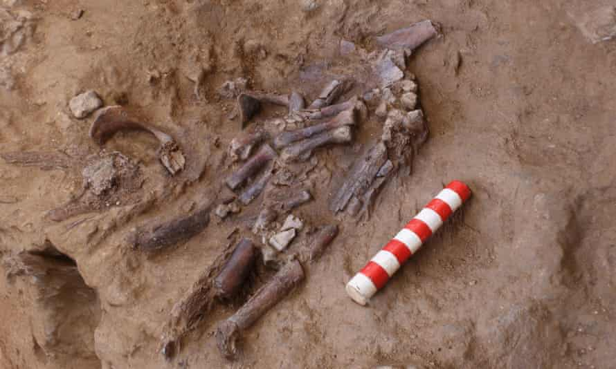 The remains of the skeleton discovered.