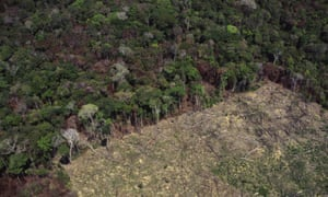 Rainforest is cleared for agriculture in Amazonas state, Brazil