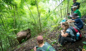 Visitors watch the elephants feed in the forest.