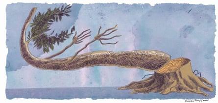 Rocco Fazzari illustration