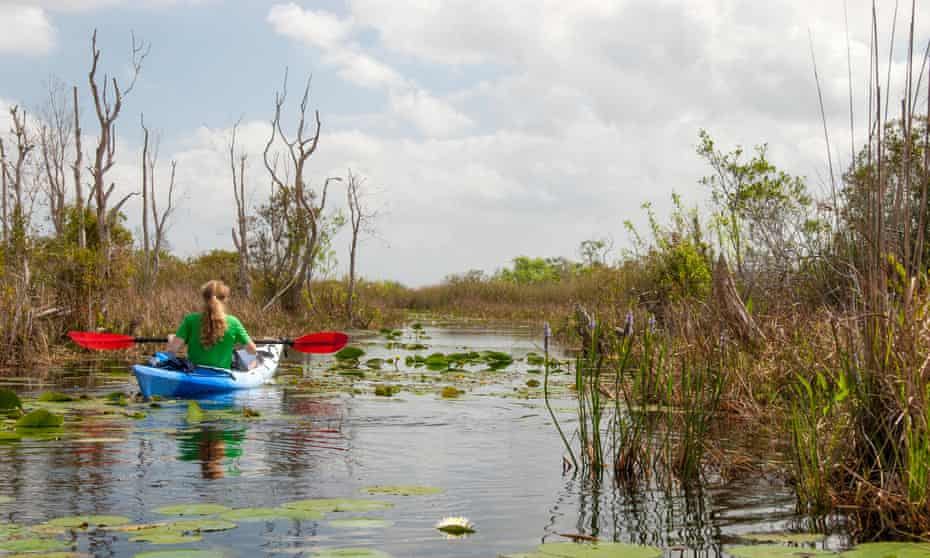 A young woman paddles her blue and white kayak through the swamps of South Florida