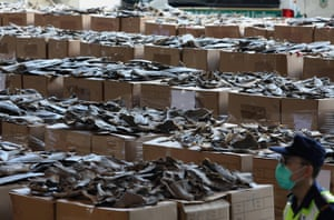 Part of a shipment of dried shark fins