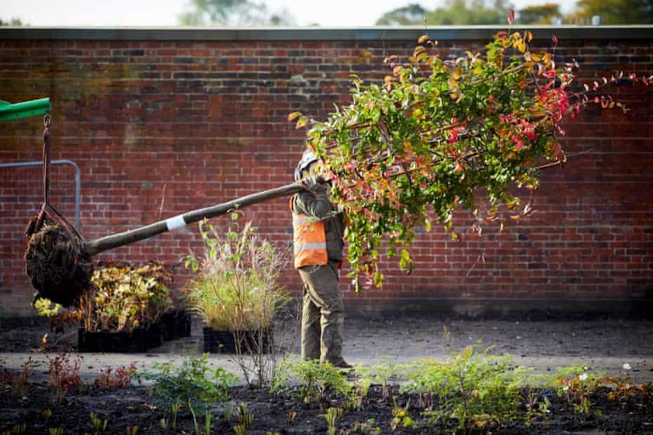 New RHS Garden Bridgewater Tree planting in the Paradise Garden at RHS Garden Bridgewater.
