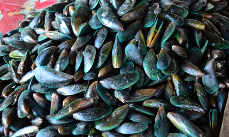 Mussels are among the New Zealand exports affected by China's suspension on Wednesday.