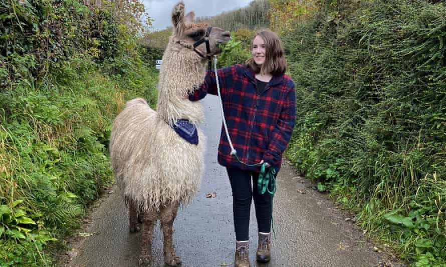 Volunteering at Pembrokeshire Llamas