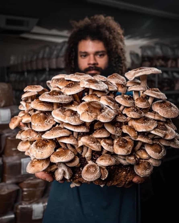Michael Crowe with an abundance of homegrown mushrooms.