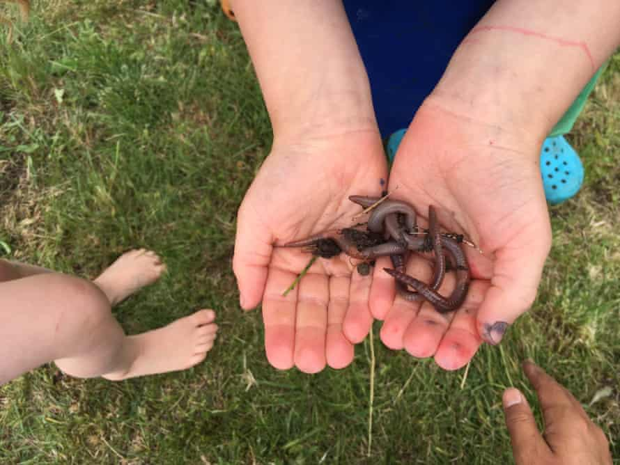Earthworms change the foundation of ecosystems.