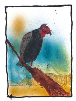 California Condor by Ralph Steadman