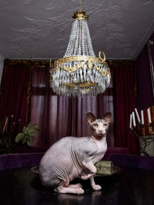 Sphynx cat Buddha photographed by Isabella Rozendaal in Amsterdam.