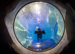 Birmingham, England. Simon Champion cleans the inside of the penguin pool at the National SEA LIFE Centre as staff prepare for reopening after the lockdown