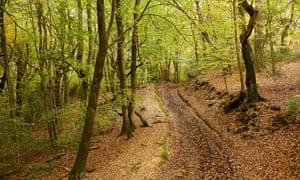 Woods within Emmetts Garden.