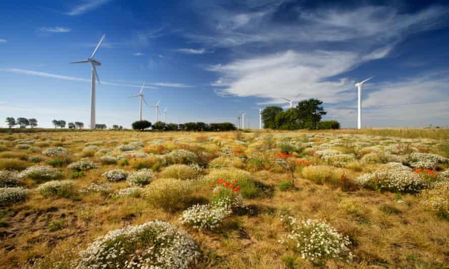 Wildflowers and wind turbines in a wind farm in East Somerton, Norfolk, UK