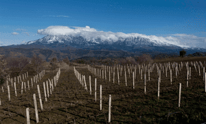Çobo winery, Albania, with Mount Shpirag in the distance