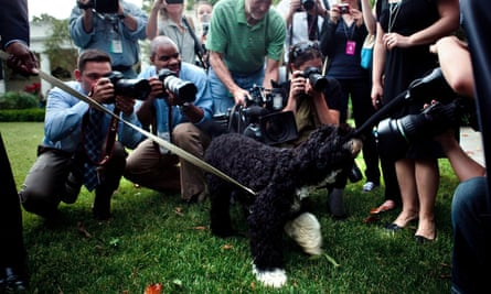 The Obamas' dog Bo laps up media attention at the White House in 2009.