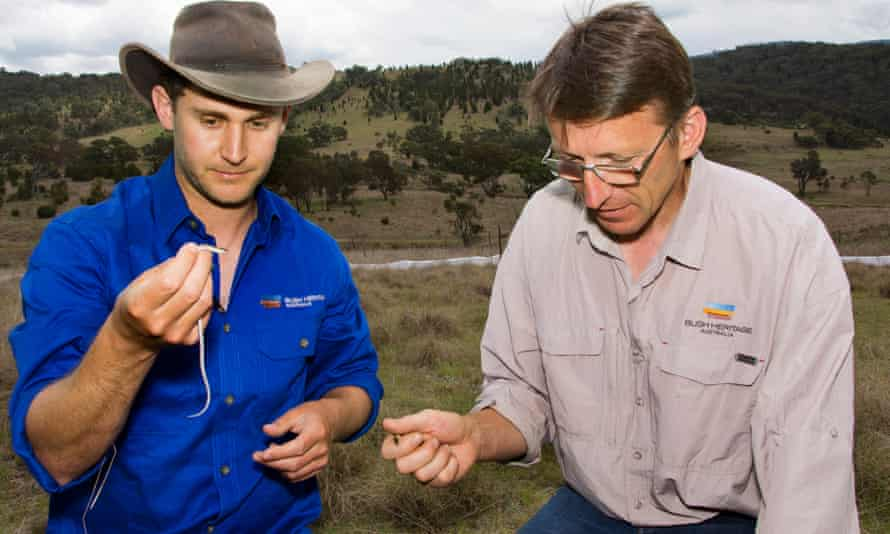 Brett Howland, academic and Bush Heritage contractor, left, and Peter Saunders, a Bush Heritage landscape manager.