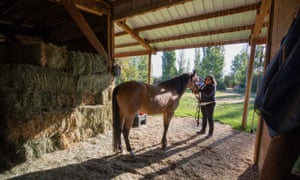 Shelby Edwards is looking for just the right place to go where she, her horses and dogs can call home.