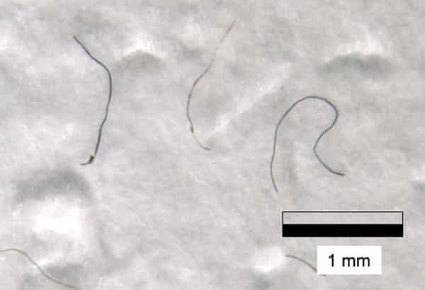 A selection of microfibres found in snow samples at 8,440m elevation on Mount Everest.