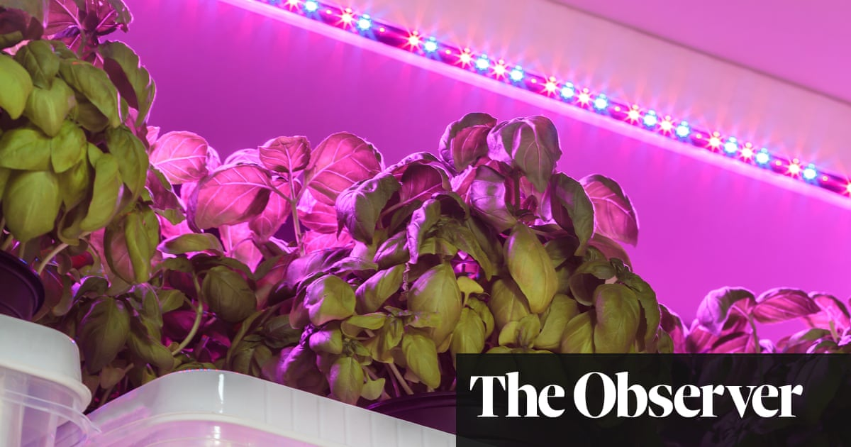 The Brilliant Indoor Benefits Of Led Grow Lights Life And Style