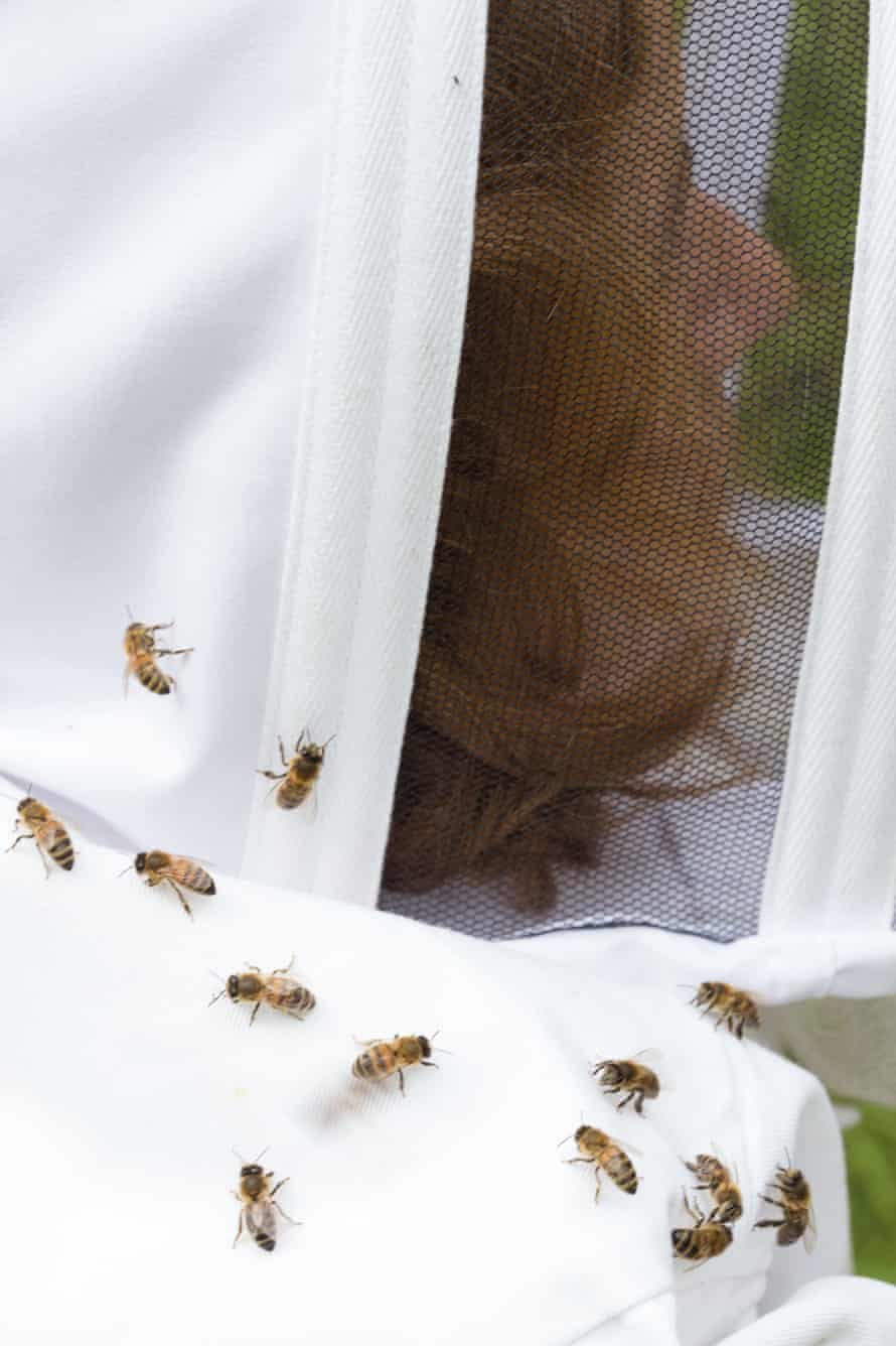 Alys gets to know her bees.