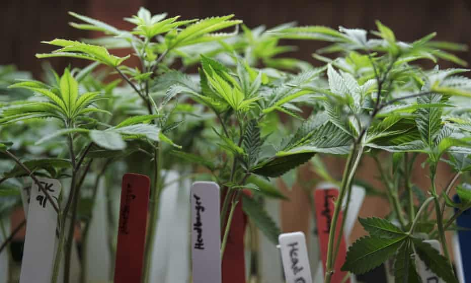 Medical cannabis is subject to differing legislation from state to state.