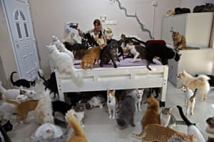 Maryam al-Balushi feeds some of her 480 cats. She also has 12 dogs, and says her pets are a mood lifter.