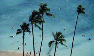 Hawaii beach and palm trees